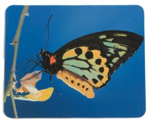 Mouse mat - Butterfly Picture - Free Postage